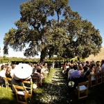 wedding vows under an old oak tree